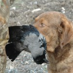 Bjarne Frost hund med fugl