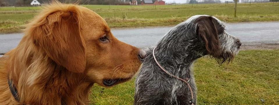 Hundetræning hundeslide