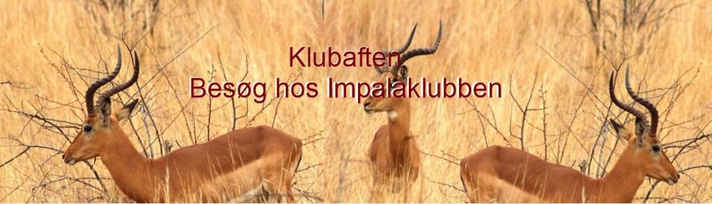Klubaften slide impalaklubben