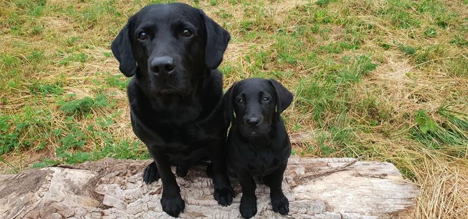 Hunde stor-lille